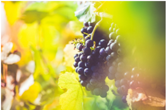 BMO - Bulgaria Wine - Art - Article 2 - Photo 1