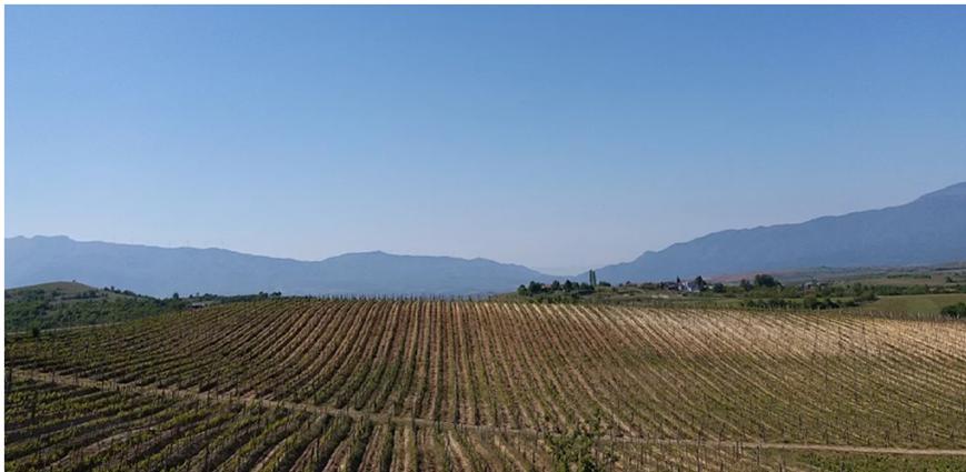 BMO - Bulgaria Wine - Art - Article 9 - Photo 1 Collage